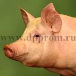 Посадочное устройство для свиней - фото 27796