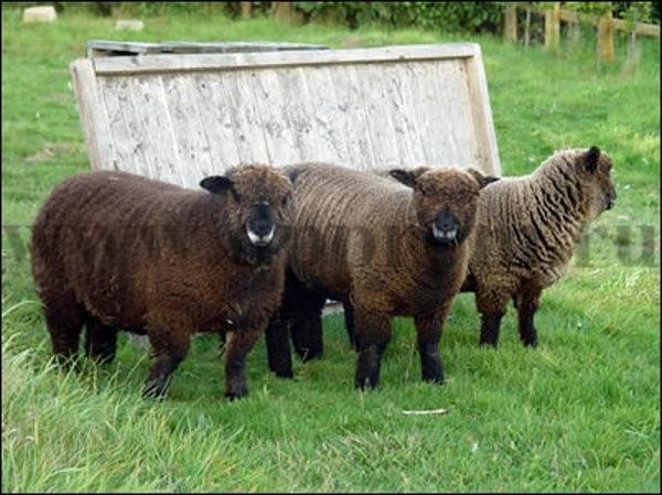 Комплект для содержания овец ДППО-220-600 - фото 29467