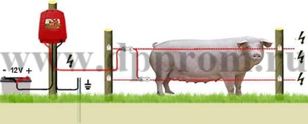 Комплект для содержания свиней ДППС-12-500 - фото 29474