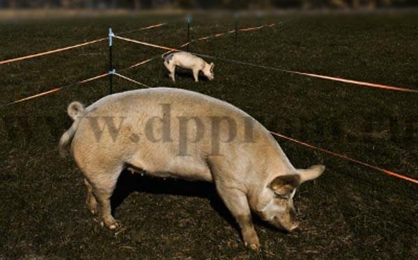 Комплект для содержания свиней ДППС-12-3000 - фото 29488