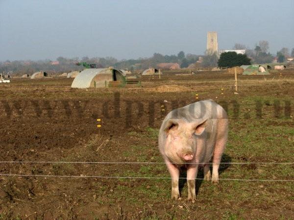 Комплект для содержания свиней ДППС-220-500 - фото 29493