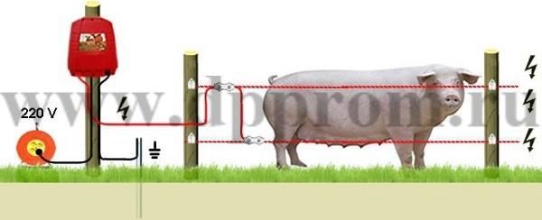 Комплект для содержания свиней ДППС-220-1000 - фото 29498