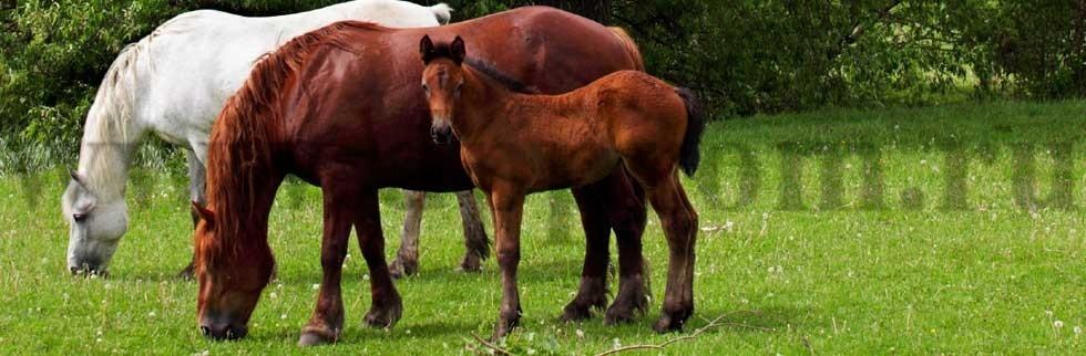 Комплект для содержания лошадей ДППЛ-12-800