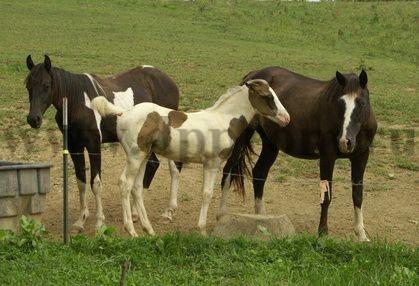 Комплект для содержания лошадей ДППЛ-12-500М - фото 29577