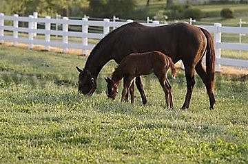 Комплект для содержания лошадей ДППЛ-220-600 - фото 29601