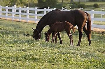 Комплект для содержания лошадей ДППЛ-220-600М - фото 29631
