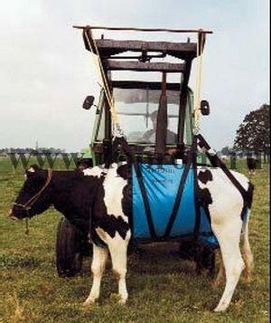 Приспособление для подъема коровы