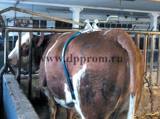 Анти-брык для коров