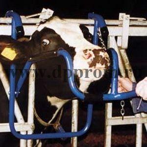 Механизм фиксации головы коровы