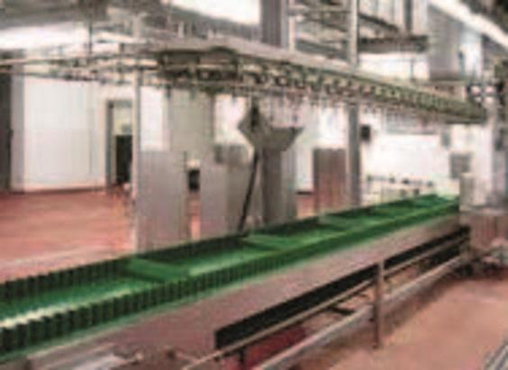 Комплексные установки и системы для убоя овец - фото 54304