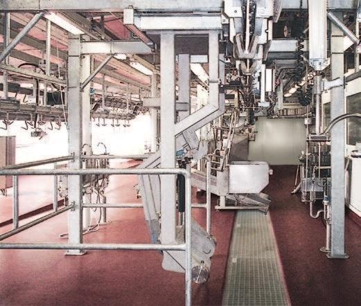 Комплексные установки и системы для убоя овец - фото 54306